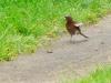 ptak-3