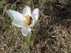 1_pszczolka
