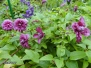 Kwiaty działki 23 i 33